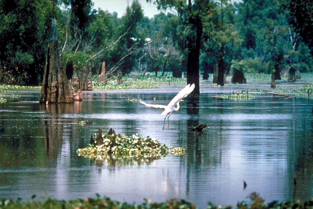 Wetland Watchers Win Gulf Guardian Award!